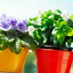 Как перевозить комнатные цветы